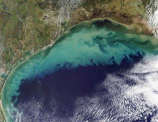 Les engrais et pesticides causent des zones mortes à certains endroits dans le monde. Ici, il s'agit d'une région du Golf du Mexique, sur les côtes de la Louisiane. La couleur turquoise est une région contaminée, où la vie marine peut difficilement exister. (Référence: NASA)