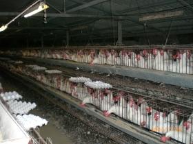 Les méthodes de productions industrielles pour la production de poulet, d'oeuf et de porc consiste en général à garder les animaux dans des espaces restraints, tout en leur donnant des végétaux cultivés, tel que du maïs, de l'orge, du soya, des pois, de l'avoine, du canola, etc.