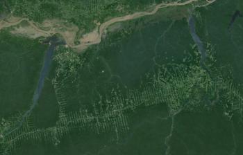 Voici un exemples déforestation de la forêt amazonienne pour la création de pâturage. C'est dans la état de Pana, au sud de la rivière amazonienne (elle est au nord de l'image). Source: Google Earth (imagerie de Landsat).